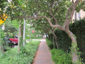 Most places in historic Savannah, trees frame the streets